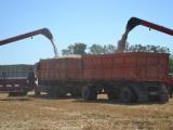 Выход на качество зерна