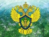 Светлана Радионова, возглавившая Росприроднадзор, начала «чистку» ведомства